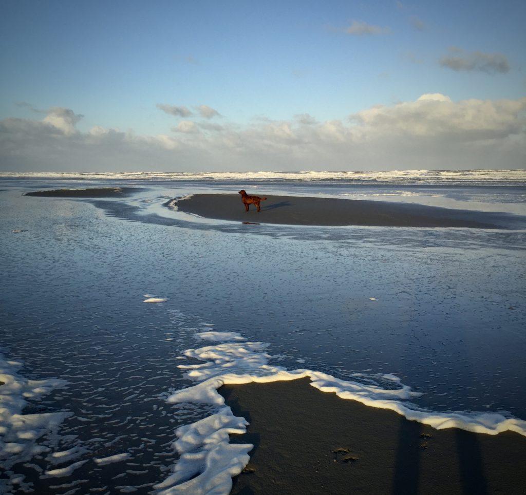De Zee en haar Zout